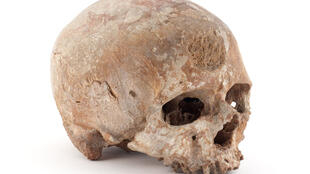 Le Musée de l'Homme abrite 700 000 objets de préhistoire dont le plus célèbre est sans doute le crâne de Cro-Magnon, dit « le vieillard » (paléolithique supérieur).
