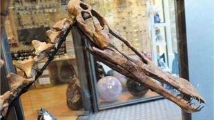 Fóssil de pterossauro brasileiro estava à venda no site eBay.