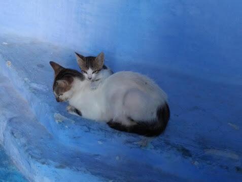 Es el reino de los gatos.