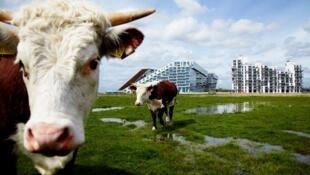 Habitantes preferem consumir carne de animais que foram bem-tratados