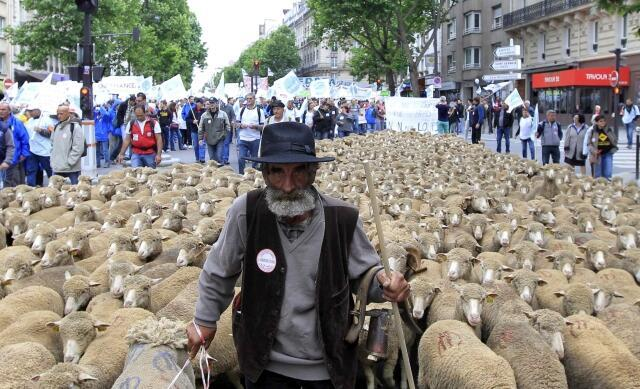 A farmer brings his sheep to Paris to demand a better deal in world trade negotiations