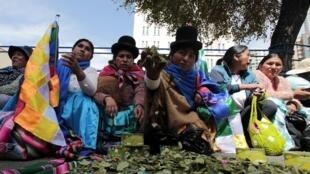 A La Paz, des femmes productrices de coca mastiquent la feuille sacrée devant l'ambassade des Etats-Unis, le mercredi 12 mars 2014