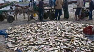 Pêcheurs mauritaniens à Nouadhibou.