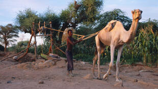 Un touareg se ravitaille en eau dans une oasis, près d'Agadez, au Niger.