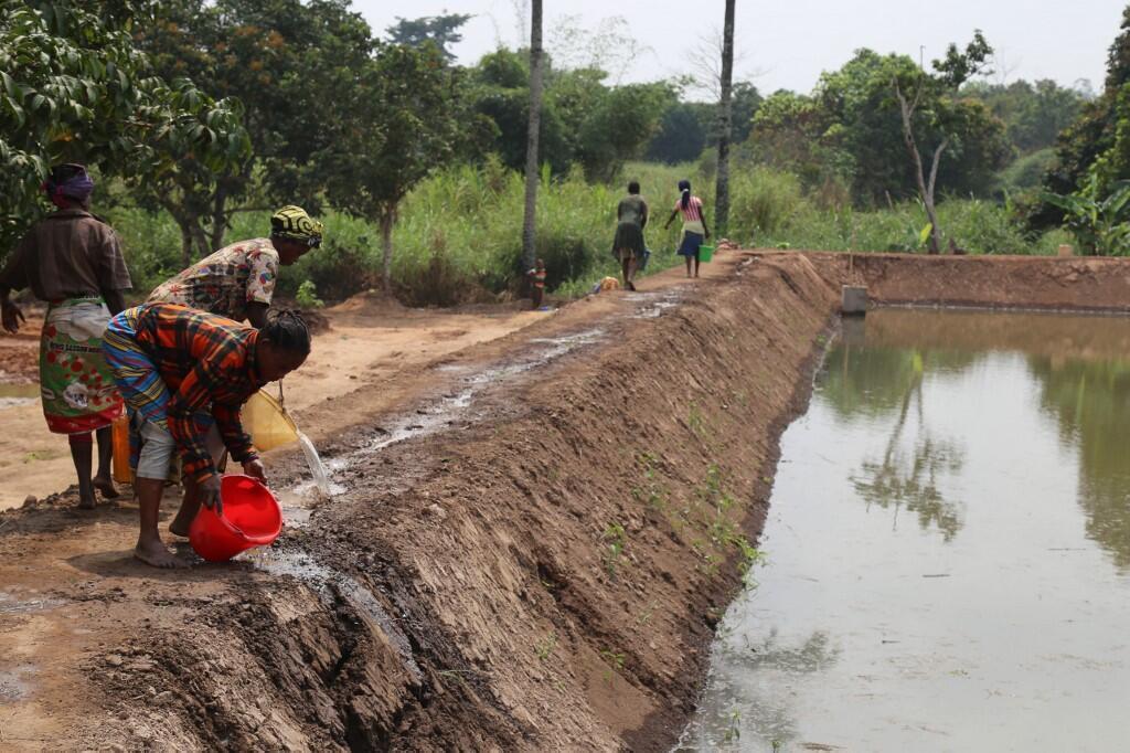 Des ouvriers restaurent des champs et des étangs dans une coopérative agricole et piscicole de Mindouli dans la région de Pool, le 24 juillet 2019.