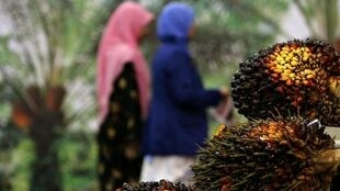 Grappe de fruits du palmier à huile à Kuala Lumpur, en Malaisie.