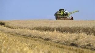 Récolte dans l'est de la France au mois de juillet.