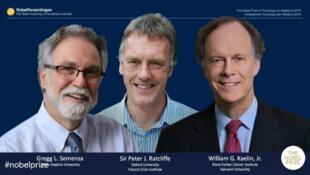 2019年諾貝爾生理學或醫學獎3位得主資料圖片