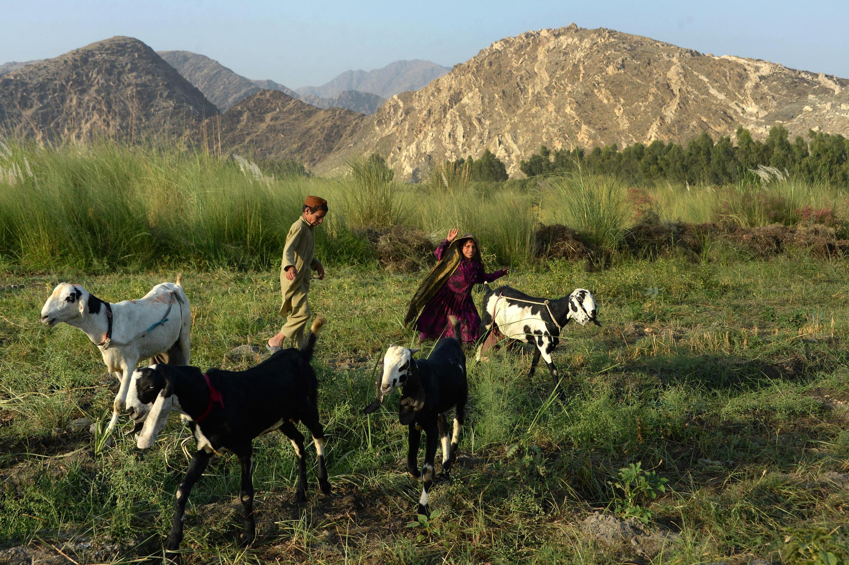 Province de Nangarhar, Afghanistan, juillet 2016.