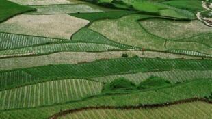 Rizières de la province chinoise du Yunnan.