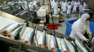Une usine de transformation de saumon, au Chili, deuxième pays producteur de ce poisson.