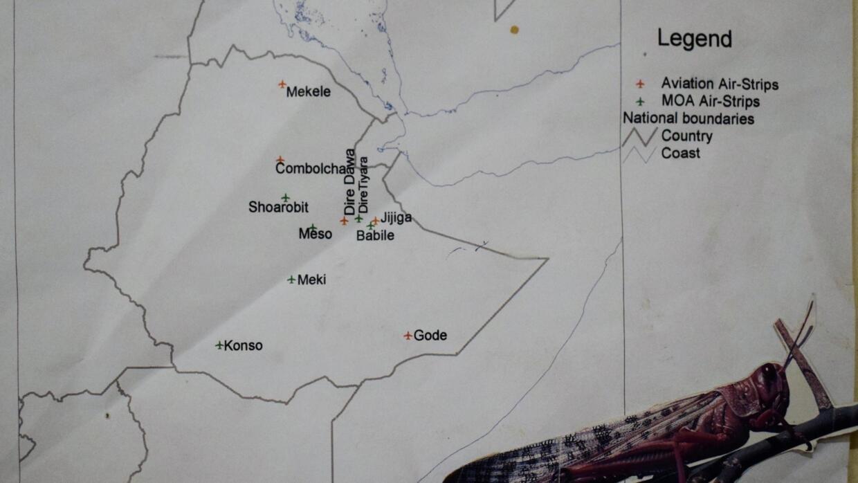Battling locusts on the frontlines of Ethiopia