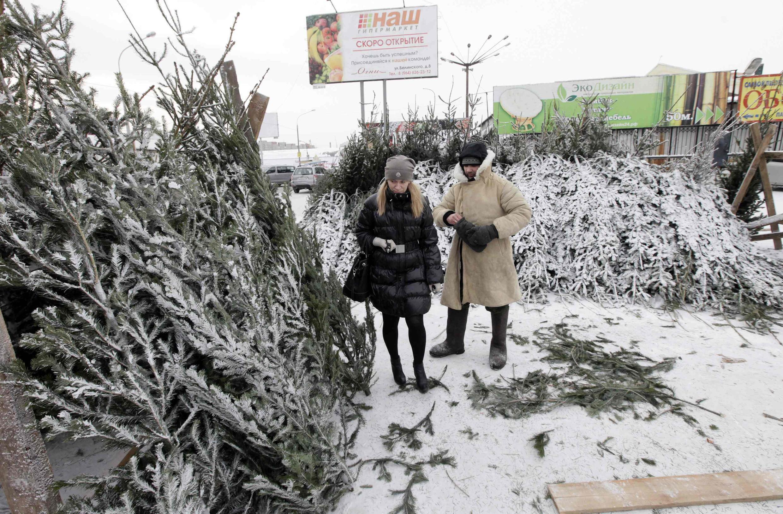 Một khách hàng mua cây thông Noel trong khi nhiệt độ bên ngoài xuống dưới -26 °C (REUTERS)