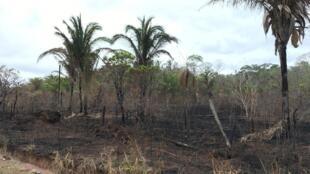 En la Chiquitanía boliviana, cerca de 4 millones de hectáreas de bosques y pastizales fueron quemados. Aquí cerca de la pequeña ciudad de Concepción.