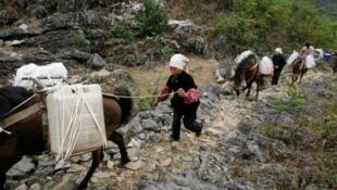 Les résidents locaux transport de l'eau livrée par le gouvernement local avec des chevaux dans un village du comté de Napo.
