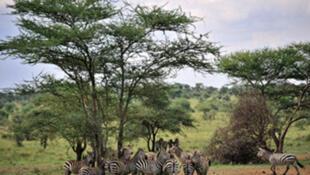 Moja ka ya mbuga za wanyama nchini Tanzania