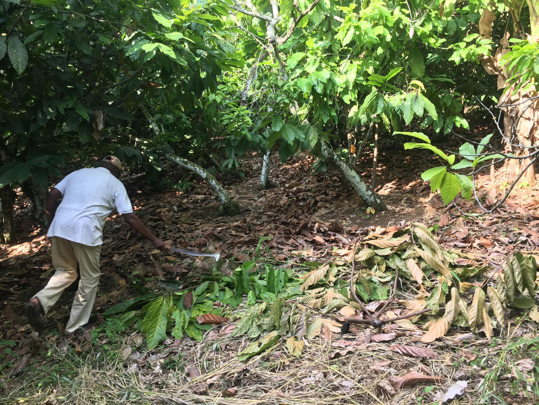 Pour Augustin Daouda Diallo, un prix plancher du cacao à 1 100 F pourrait changer les choses.