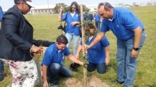 纪念曼德拉诞辰  在罗本岛种下101棵树                             2019年9月18日