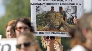 Des personnes réclament justice après la mort du lion Cecil devant le cabinet dentaire de Walter James Palmer, l'Américain qui a reconnu avoir tué le félin au Zimbabwe, le 29 juillet 2015.