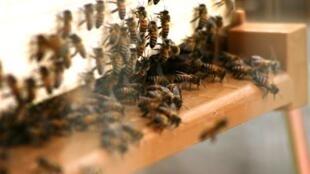 Un laboratoire pour protéger les abeilles a été inauguré au Kenya.