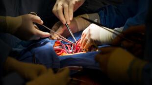 Les opérations de greffe de membres ou d'organes internes sont des actes chirurgicaux particulièrement délicats.