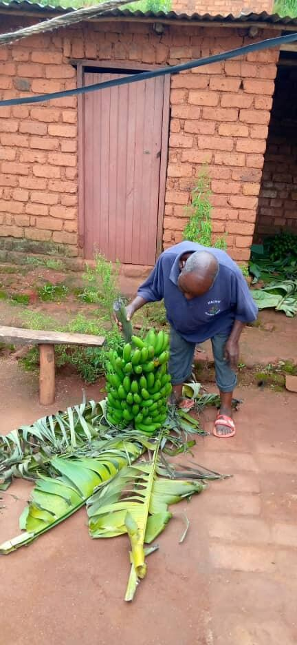 Traditional authority Msabwe MacDonald Mtokota in Thyolo, Malawi. He says the govenrment needs to open the banana market more.