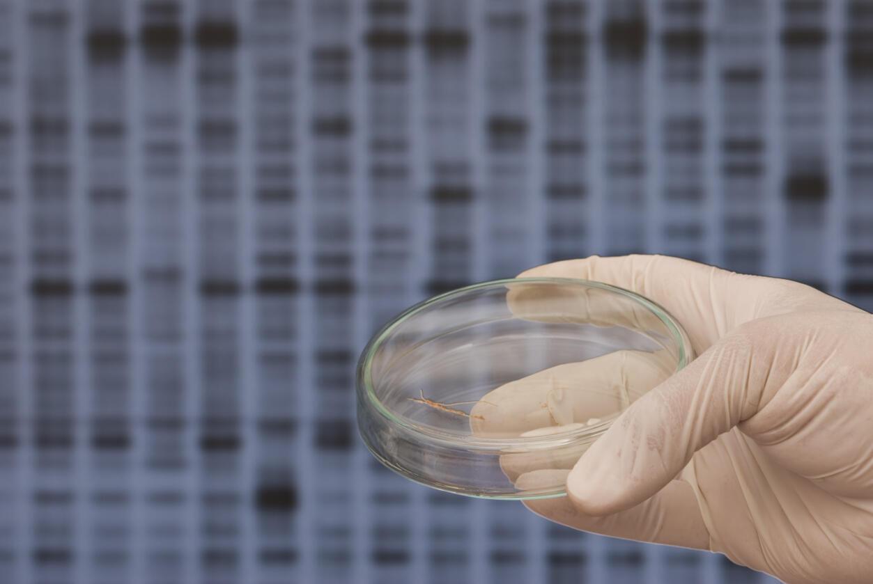 Des nano-robots capables de contrôler le fonctionnement des gènes de bactéries.