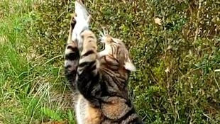 Aux origines de sa cohabitation avec l'être humain, le chat était apprécié pour chasser les rongeurs.