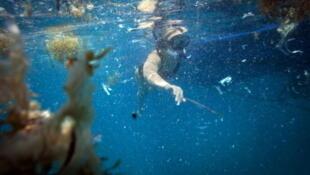 Le sperme et les embryons conservés à Dubbo pourraient permettre la  reconstitution in vitro du corail, lequel serait ensuite réimplanté en milieu naturel.