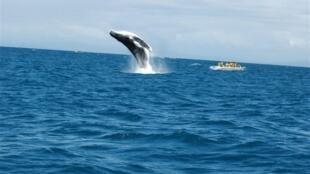 Des touristes admirent une baleine à bosse au large de Sainte-Marie, à Madagascar.