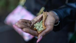 cannabis - new - york