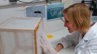 La investigadora Lin Op de Beeck en su laboratorio, agosto de 2016.