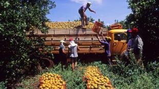Le secteur agricole représente environ 13% du PIB du Maroc.