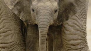 El tráfico de especies es un negocio que mueve entre 8.000 y 20.000 millones de euros al año.