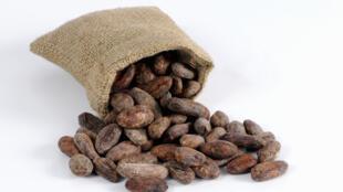 Le prix des fèves de cacao est resté très élevé en 2014.