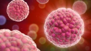 Représentation de cellules cancéreuses.