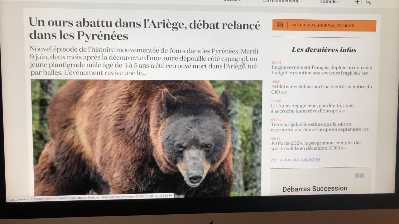 比利牛斯山一头棕熊被击毙 引发起诉