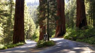 La flambée des prix du bois ne profite pas tant que cela aux sociétés forestières nord-américaines.