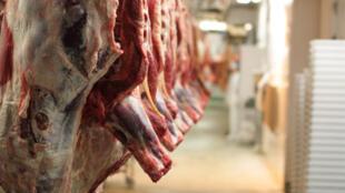 Une rangée de pièces de bœuf dans un abattoir.