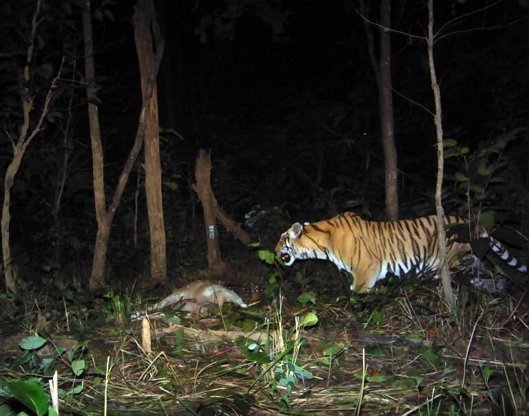Động vật hoang dã đang trên đường bị tiêu diệt bởi hoạt động không kiểm soát của con người. Ảnh minh họa.