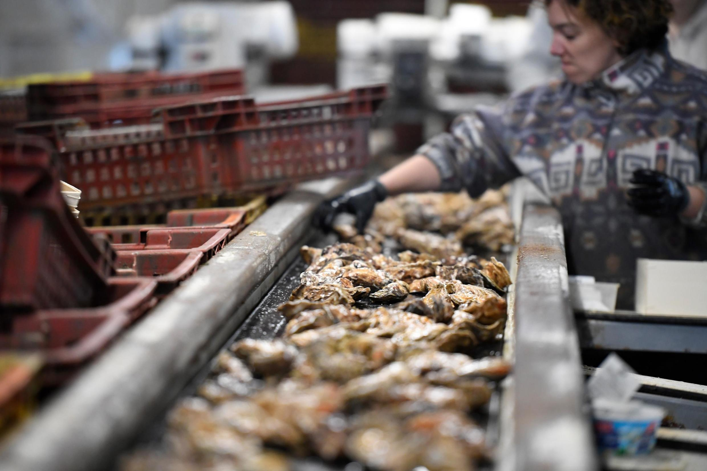 The oyster farmers say wastewater is to blame for the outbreak of norovirus, or the winter vomit bug, along the coast of Brittany.
