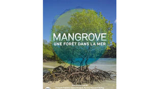 Couverture «Mangrove, une forêt dans la mer».