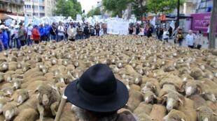 Manifestación de agricultores productores de ganado bovino afiliados a la FNSEA oen las calles de París en junio en vísperas de una reunión de los ministros de Agricultura de la UE en Luxemburgo.