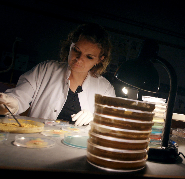 Audrey Dussutour dans son laboratoire.