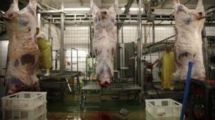 Le Danemark interdit l'abattage rituel des animaux s'ils n'ont pas été préalablement assommés.