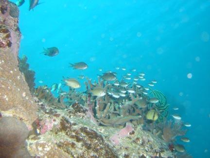 Banc de poissons autour du récif d'Ouvéa, Nouvelle-Calédonie.