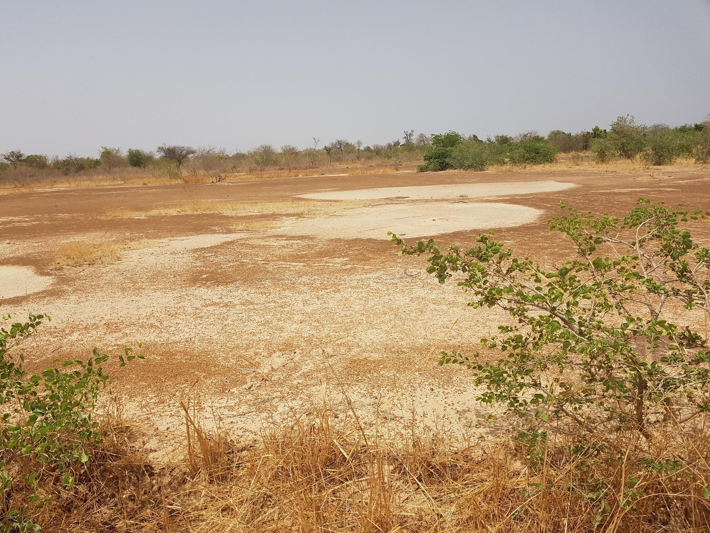 Un « Zii pélé », une terre blanche, dans le Plateau central au Burkina Faso. Il s'agit d'une terre complètement déminéralisée et encroûtée, impropre à l'agriculture.
