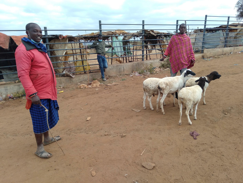 Masai pastoralists, like Thomas Kapei (in red blanket) in Kajiado county, Kenya who subscribe to the Mbuzi Moja Afya Bora health initiative.