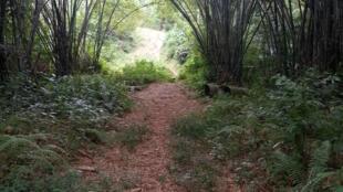 Forêt gabonaise.