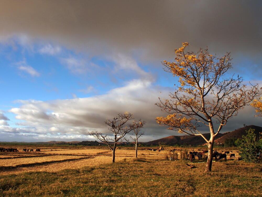 Conséquences du réchauffement climatique, les phases de sécheresse se multiplient à travers le globe. Ici à Madagascar.
